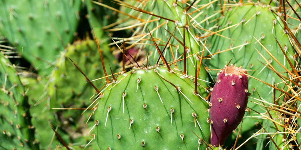 cactus avoid pain and build sustainable traffic